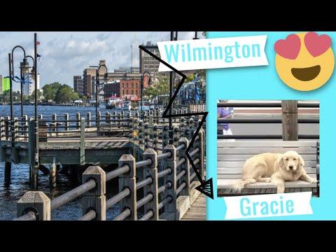Best Golden Retriever: Gracie OFF LEASH K9 TRAINING-WILMINGTON, NC HEEL DISTRACTIONS