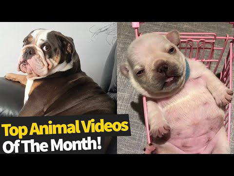 Top 50 Viral Animal Videos Of The Month - September 2019 (Funny Animals)