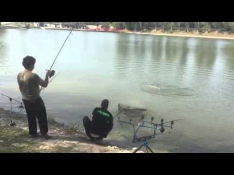 Lago delle rose monselice padova big amur 25kg youtube for Lago padova