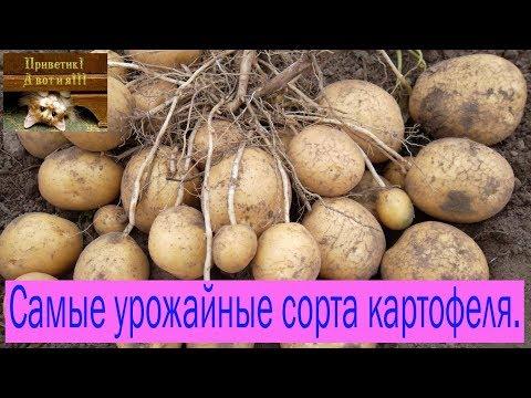 Вопрос: Какие сорта картофеля наиболее устойчивы к вирусам?