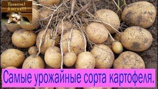 Самые урожайные сорта картофеля. Сад и огород выпуск 196(, 2017-10-16T04:53:11.000Z)