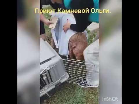 Неизвестный изрезал собаку в Новоалтайске
