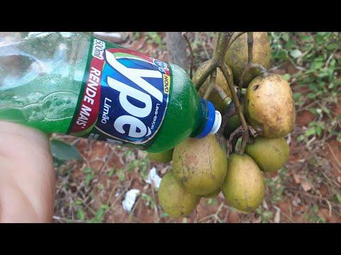 2 GOTAS detergente faz sua planta FRUTIFICAR 3 VEZES MAISVC SABIA DISSO?