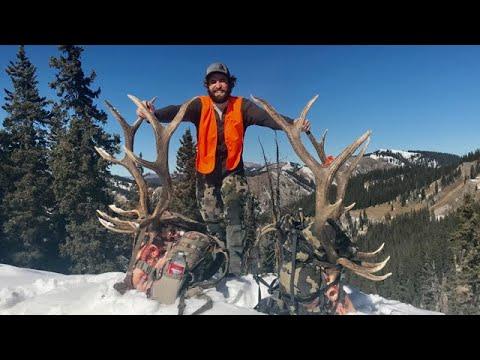 Colorado Elk DOUBLE HEADER!! - Limitless 58 -