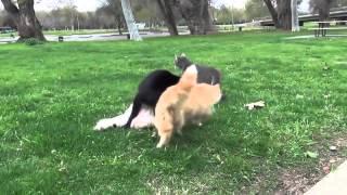 Animals Mating Animals Funny Cats Mating Breeding