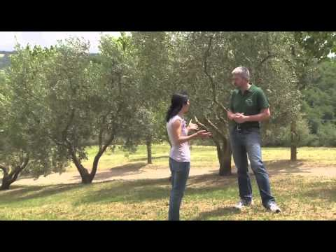A day at jovial's einkorn farm in Italy