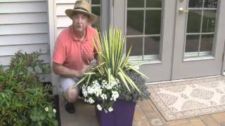 An Easy Planter Combination for a Sunny Spot by Footprints Plants
