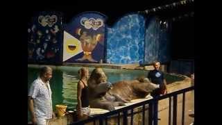 Акватория. Театр морских животных.