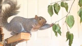 Rescued Squirrel Gives His Family Endless Entertainment