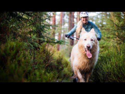 HOW TO TRAIN A MTB TRAIL DOG - AMANDA & KAI