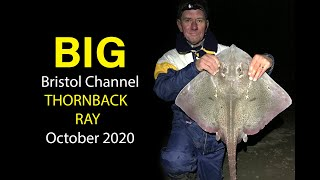 BIG Bristol Channel Thornback Ray