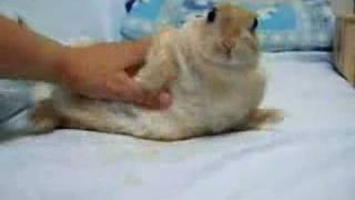 ソファーでおぼれるウサギ thumbnail