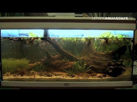 Biotope Aquarium Design Contest 2014 - the 5th place, South America