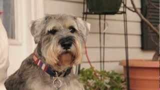 Wild Broady - Dog Commercial | Yuki's Dog Training Academy