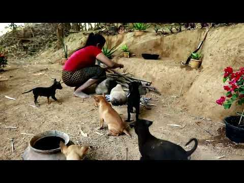 Primitive In forest one - woman Catch the fish,cook itforthe dogs - dogs Eating fish delicious