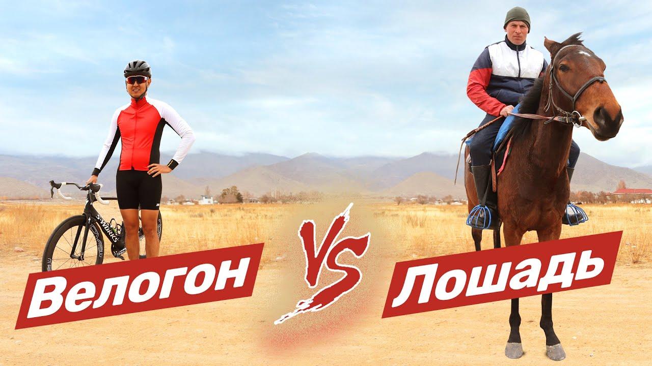 Кто быстрее лошадь или велосипедист? Ваши ставки