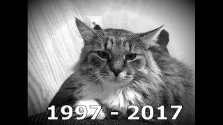 Умерла наша любимая кошка.