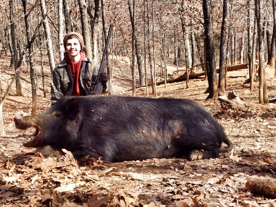Giant Hog Killed in Missouri