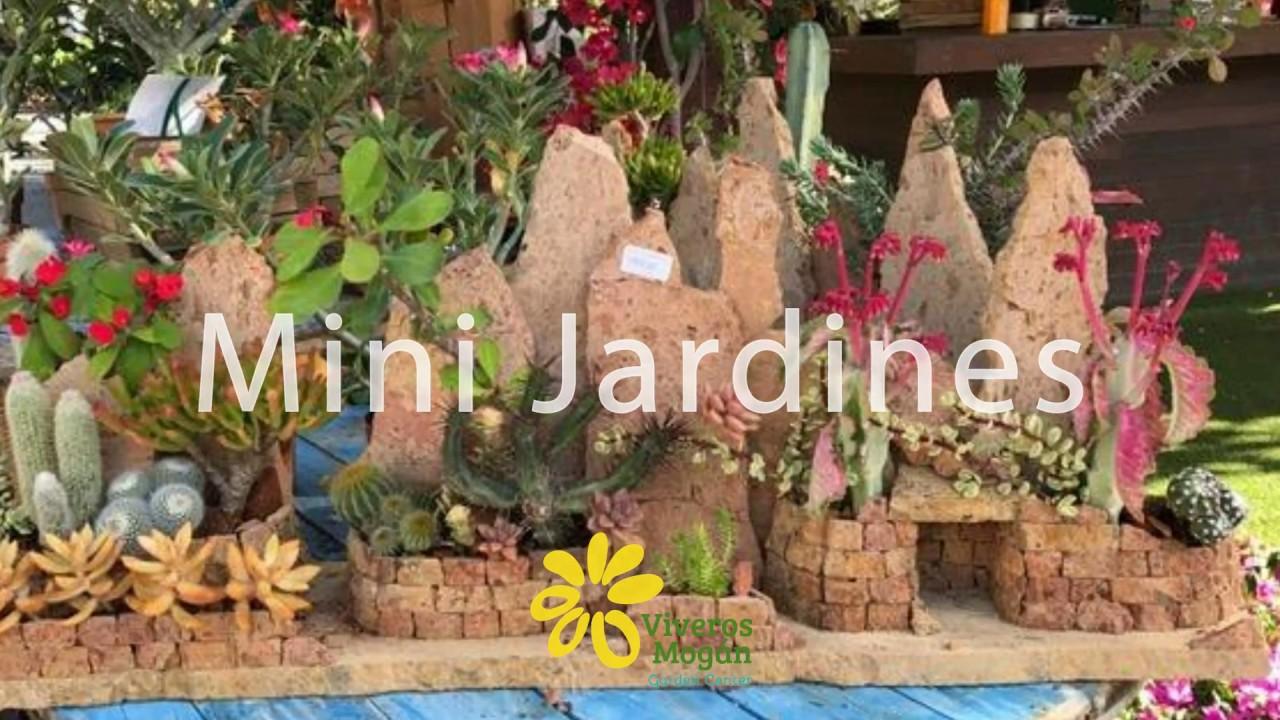 Consejos para crear tu mini jard n por viveros las palmas for Vivero tu jardin