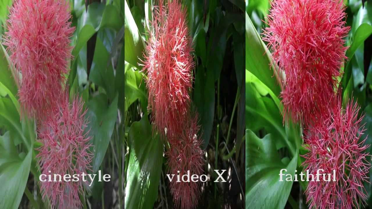 Canon Picture Style video comparation Cinestyle video x faithful