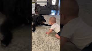 Baby Can't Stop Laughing at Playful Dog