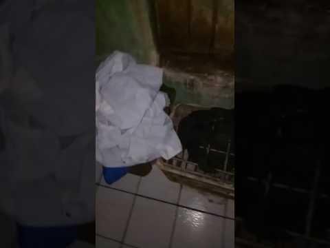 Ngintip tetangga mandi thumbnail