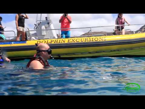 Oahu Wild Dolphin Swim and Snorkel Excursions