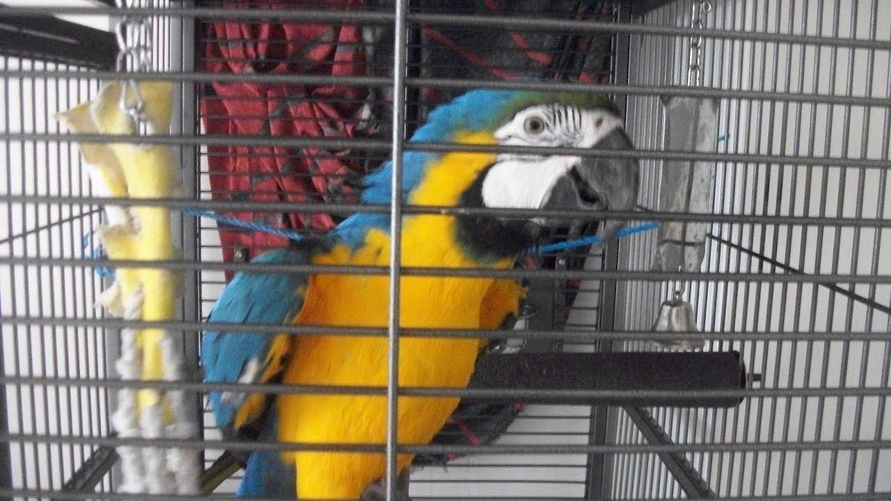 Parrots Every Type In Karachi Zoo Garden By Iftikhar Aseel