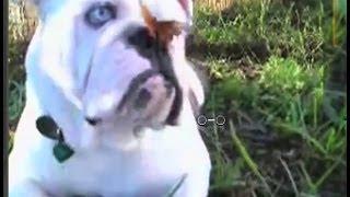 Смешные собаки 1, подборка 2013-2014