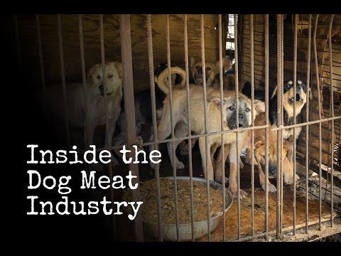 Inside The Korean Dog Meat Industry