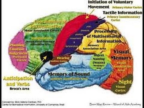 How does the brain work w/ Neil deGrasse Tyson NOVA HD