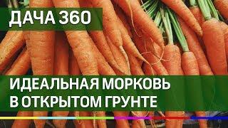 Высаживаем морковь на ленте - ДАЧА 360