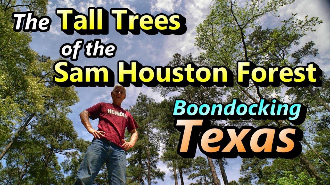 Tall Trees of Sam Houston: Boondocking Texas