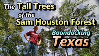 tall-trees-of-sam-houston-boondocking-texas