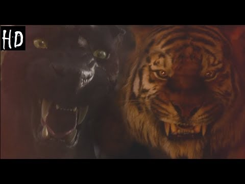 Mogli 2016 Shere Khan Vs Bagheera Hd Pt Br