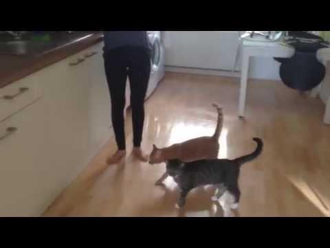 Cat Emil jump fail