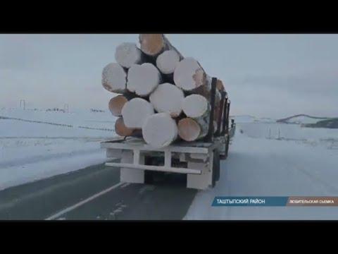 Таштыпские депутаты подозревают, что в Хакасии продолжается уничтожение кедра