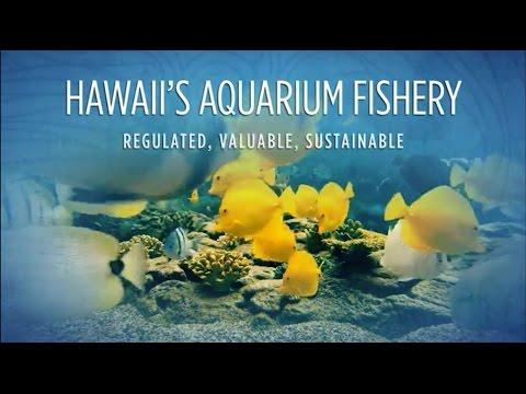 Hawaii's Aquarium Fishery:  Regulated, Valuable, Sustainable