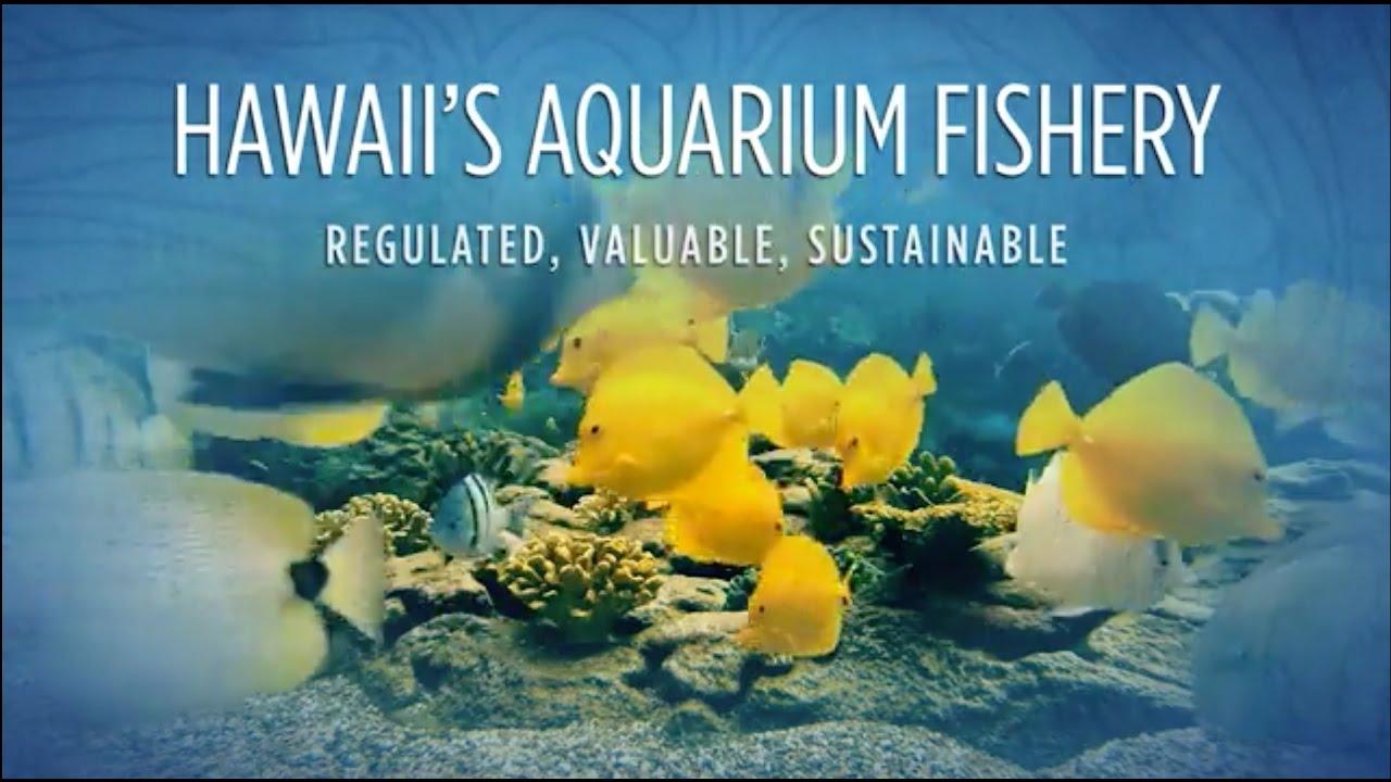 Wild caught fish - OATA - The Ornamental Aquatic Trade