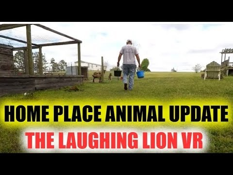 Home Place Animal Update  The Laughing Lion VR