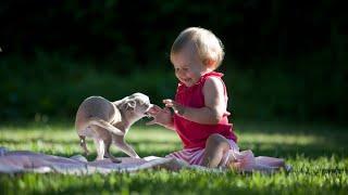 Подборка смешных роликов о дружбе собак и младенцев Funny videos about dogs playing with babies
