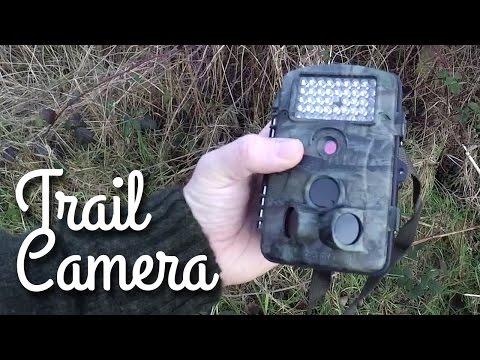 Trail Camera | Deer and Badgers