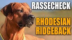 Rassecheck - Rhodesian Ridgeback - Hundeschule STADTFELLE