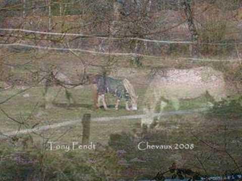 hqdefault - Les structures sociales dans les sociétés animales: les équidés