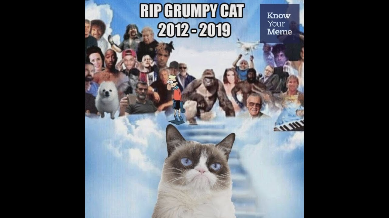 In Loving Memory Of Grumpy Cat