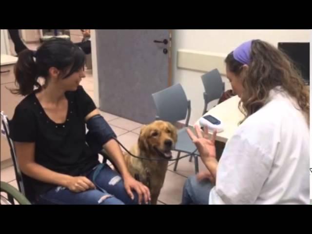 פרויקט הכשרת כלבי שירות במסגרת דוגסקול