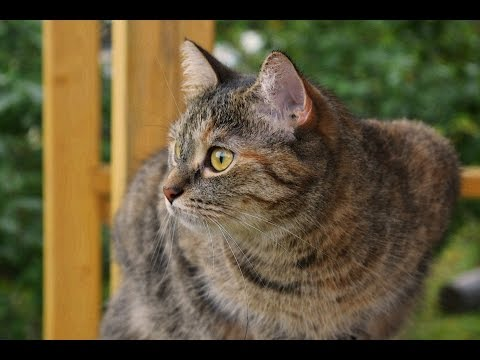 Как я навсегда отучила кошку гадить где попало. How I broke cat's habit to defecate anywhere
