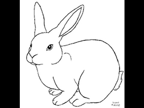 How to draw the rabbit draw the rabbit easy 100