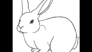 rabbit draw drawing easy rabbits simple getdrawings step