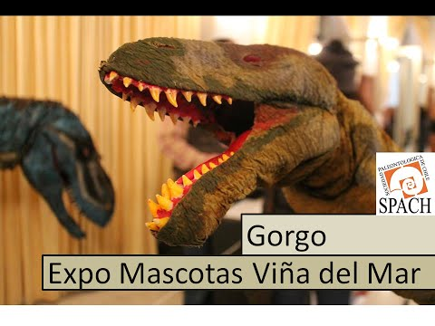 Gorgosaurus costume Expo mascotas 2014 Viña del Mar